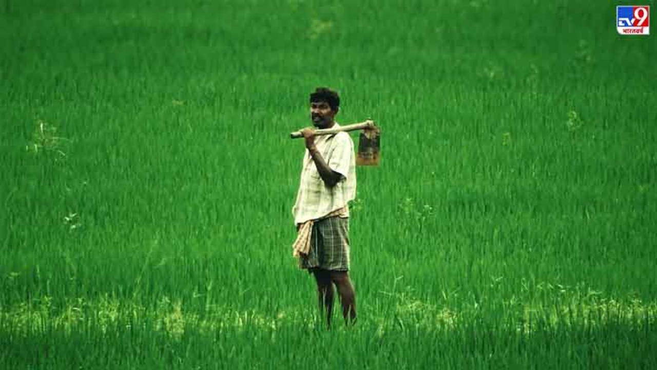 बिहार में 70 हजार किसानों को आज मिलेगी रबी सहायता राशि की पहली किश्त! कुल 226 करोड़ रुपए बांटेगी प्रदेश सरकार