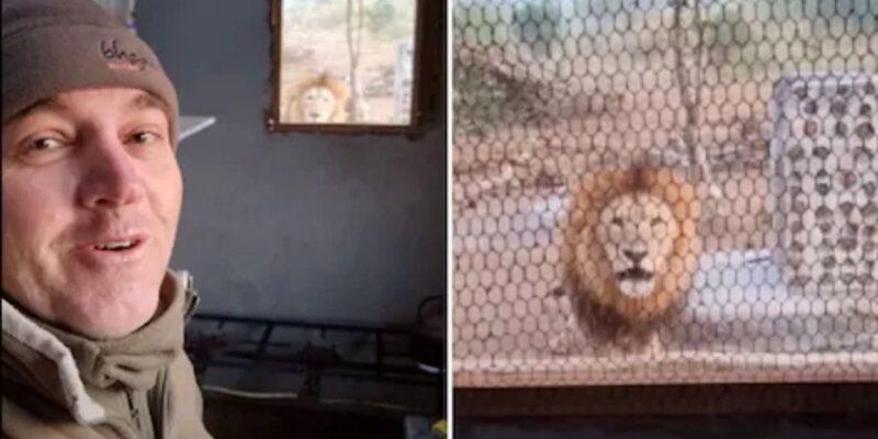 किचेन में कॉफी बना रहा था शख्स, तभी खिड़की के बाहर नजर आया बब्बर शेर- वीडियो