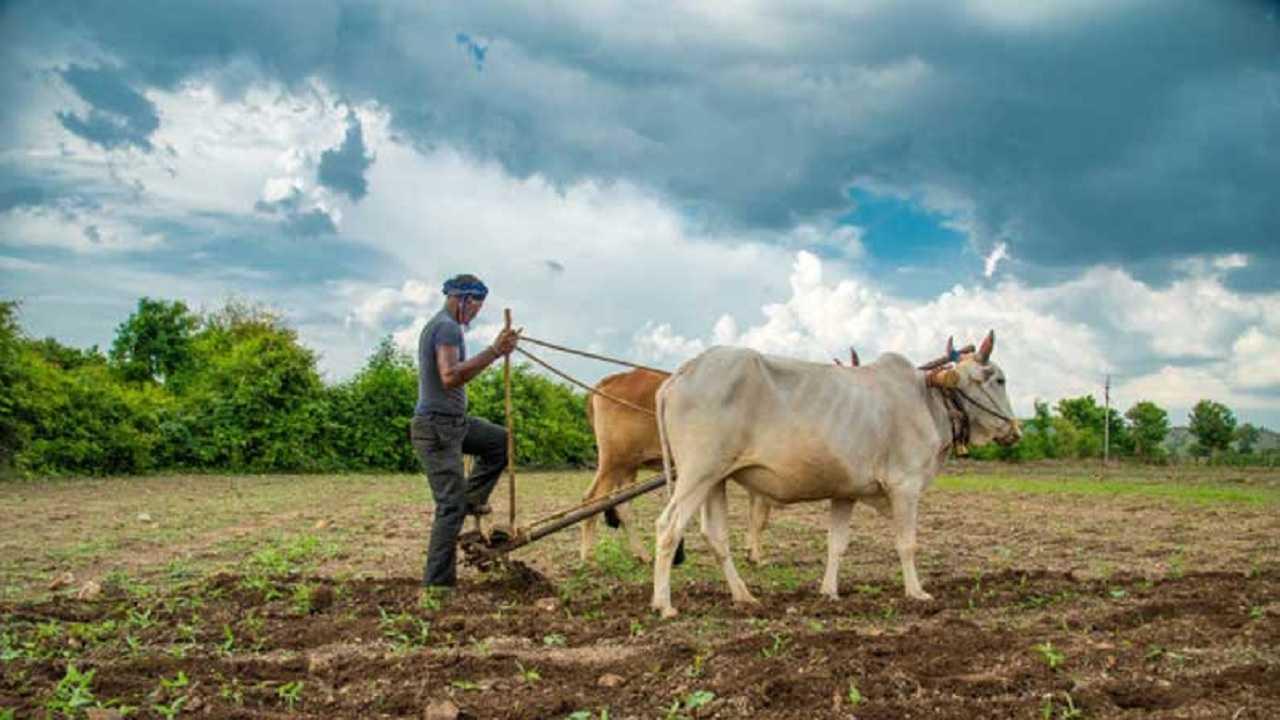 महाराष्ट्र के किसानों से कृषि विभाग की अपील, समय पर दें बीमा कंपनियों को फसल को हुए नुकसान की जानकारी