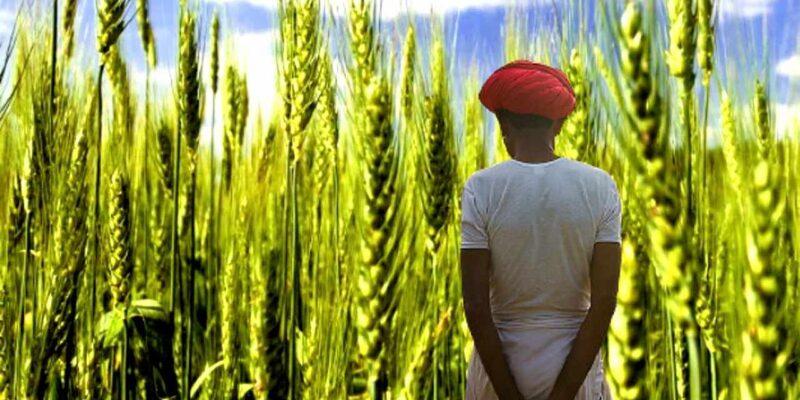 किसानों के लिए अलर्ट! पूसा के कृषि वैज्ञानिकों ने जारी की एडवाइजरी, उठाएं लाभ