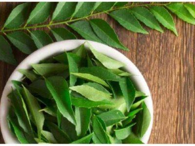 Curry Leaves Benefits : करी पत्ते सिर्फ स्वाद ही नहीं बढ़ाते, वजन घटाने में भी होते हैं मददगार