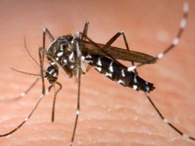 गर्भवती महिलाओं से बच्चे तक पहुंच सकता है डेंगू, जानिए कितना खतरनाक है ये...!