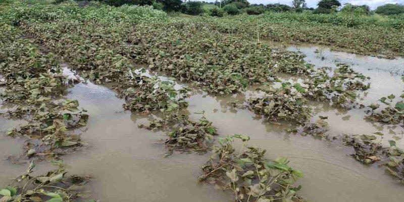मराठवाड़ा में भारी बारिश से तबाही, लाखों का हुआ नुकसान, किसानों की आंखों में आंसू