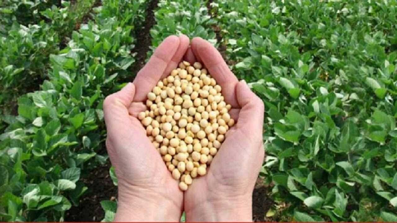 मध्य प्रदेश की रतलाम मंडी में किसान ने 16,151 रुपए प्रति क्विंटल के भाव से बेचा सोयाबीन, पहली बार मिली इतनी कीमत