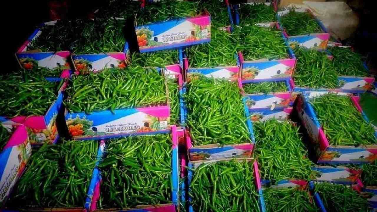 संकट में किसान! अब 1 रुपये प्रति किलोग्राम हुए मिर्च के दाम...