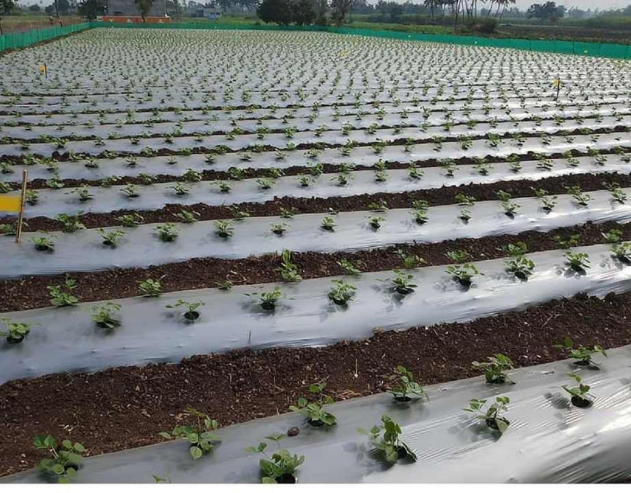 झारखंड के चतरा जिले के किसान ने मजदूरी के बजाय खेती को अपनाया, आज कर रहे हैं अच्छी कमाई