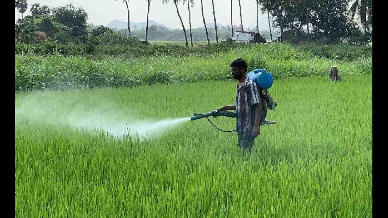 खरीफ फसलों में कीट व रोग लगने से परेशान हैं महाराष्ट्र के किसान, उत्पादन में आ सकती है कमी