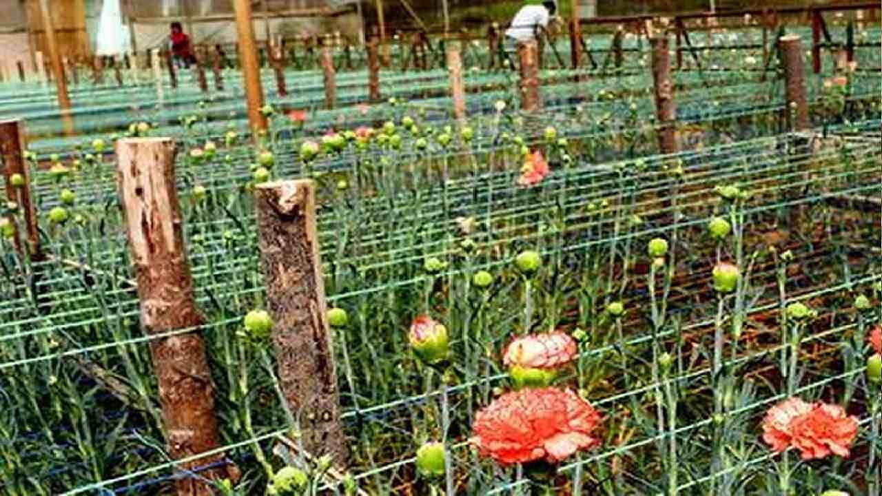 सब्जी की खेती छोड़कर किसान करने लगे फूल की खेती, अब होती है लाखों में कमाई