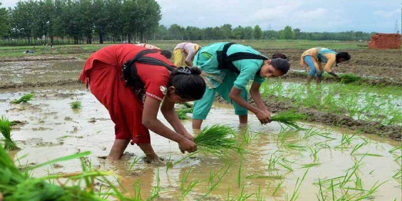 खरीफ फसलों का बंपर उत्पादन और एमएसपी में वृद्धि का किसानों को मिलेगा लाभ, ग्रामीण क्षेत्र से 10,700 करोड़ तक मांग बढ़ने की उम्मीद