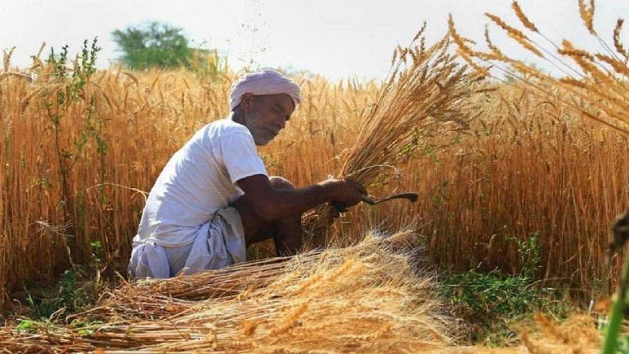 किसानों के लिए अच्छी खबर, गेहूं और जौ की उन्नत किस्मों के लिए हो रही ऑनलाइन बुकिंग, आप भी ऐसे उठाएं लाभ