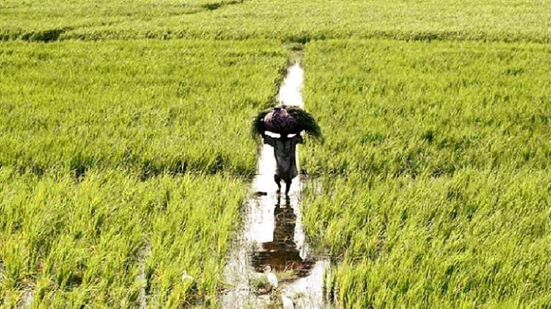 किसानों के लिए जरूरी खबर: बस 12 दिन का है समय, लेनी है 50 फीसदी छूट तो जल्द करें आवेदन