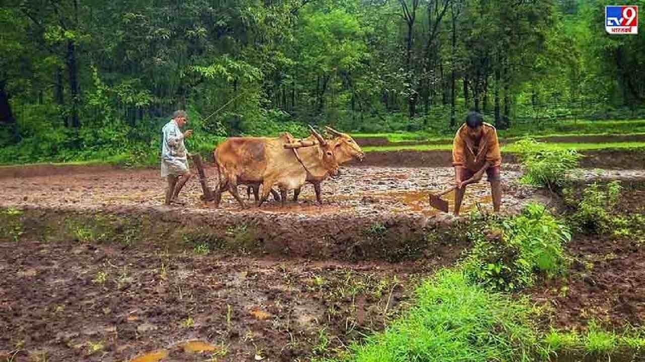 किसानों की आमदनी बढ़ाने में मदद करेगी एकीकृत अरोमा डेयरी, जानिए इसके बारे में सबकुछ