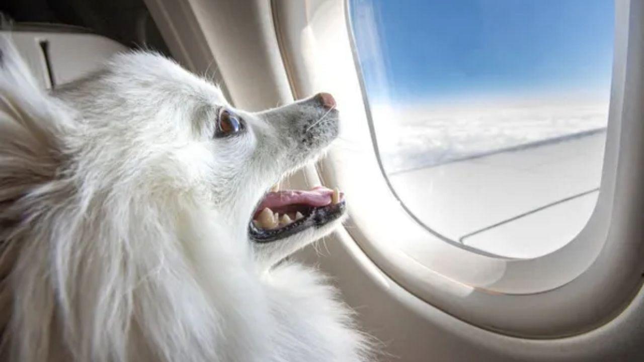 मालिक ने बुक किया अपने पालतू कुत्ते के लिए Air India बिजनेस क्लास केबिन, चुकाई इतनी कीमत