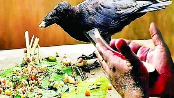Pitru Paksha 2021: पितरों की नाराजगी से बचना है, तो पितृ पक्ष में भूलकर भी न करें ये 6 गलतियां