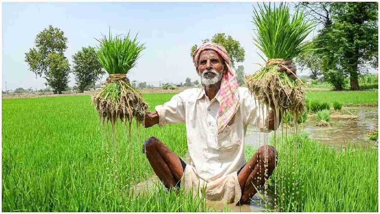 उत्तर प्रदेश में लखपति किसानों के राशन कार्ड हो रहे रद्द, जानिए क्या है इसके पीछे की वजह
