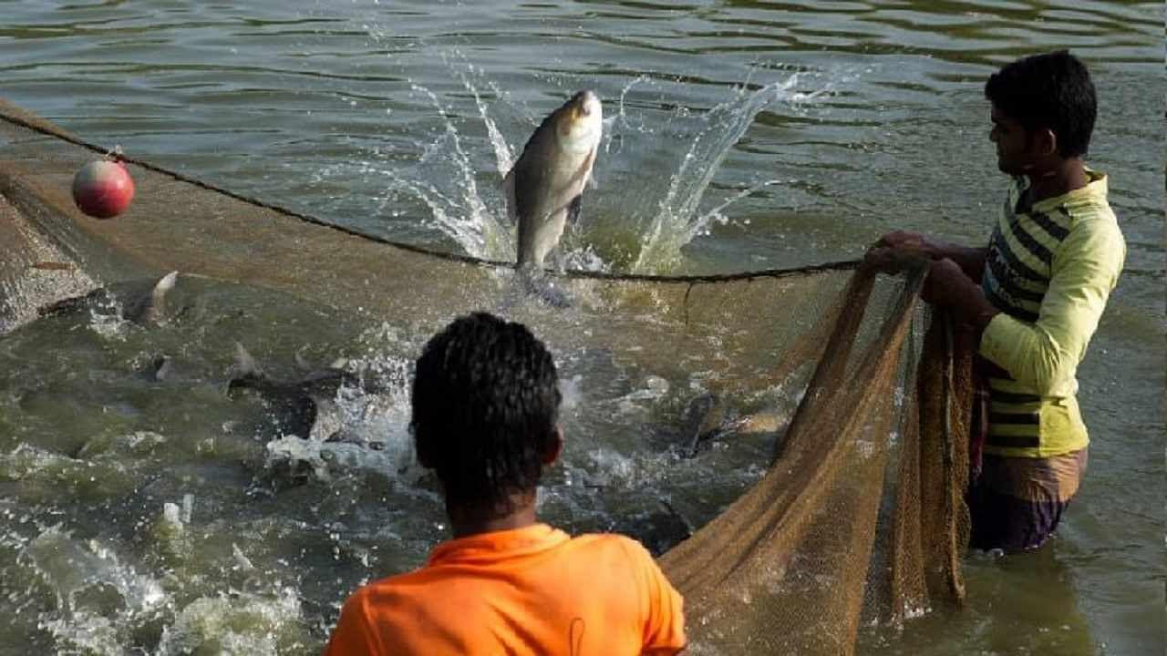 बिहार के मछली पालकों को सरकार ने दी सौगात, तालाब और हैचरी के लिए 90 प्रतिशत सब्सिडी, गाड़ी और आइस बॉक्स के लिए भी मिलेगा पैसा