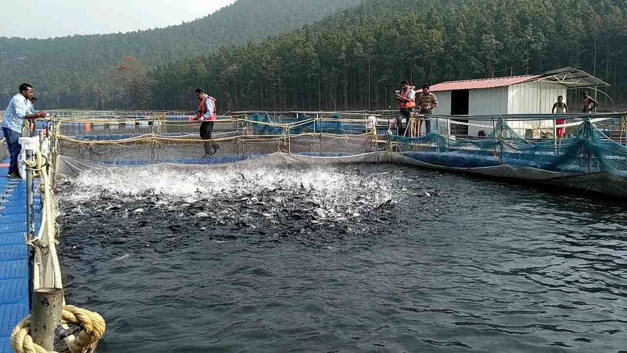 मछली और बत्तख पालन में बहुत मददगार है ये सरकारी योजनाएं, मिलते हैं लाखों रुपये