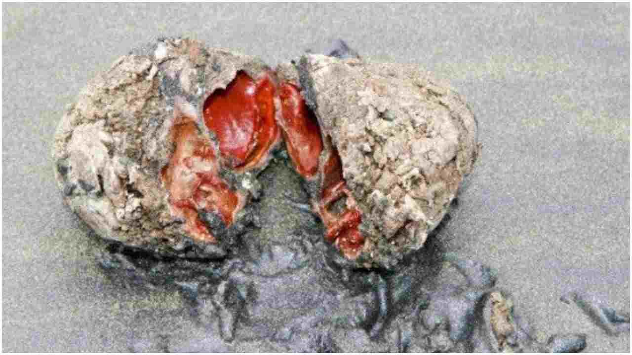 ये है दुनिया का सबसे अनोखा पत्थर, काटने पर निकलता है खून, जानिए क्या है वजह