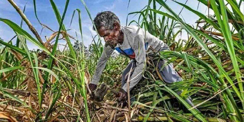 उत्तर प्रदेश: गन्ना की कीमतों में 25 रुपए प्रति क्विंटल की बढ़ोतरी, सीएम योगी आदित्यनाथ ने कहा- आठ फीसदी तक बढ़ेगी किसानों की आय