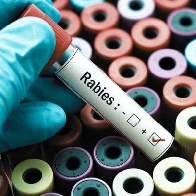 World Rabies Day 2021: इस विशेष दिन की तिथि, महत्व, इतिहास और विषय के बारे में बहुत कुछ जानें