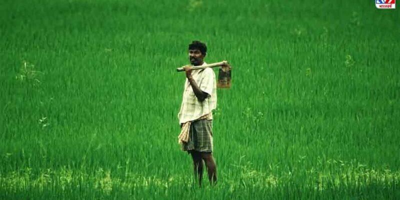 चावल और मक्का के वैकल्पिक इस्तेमाल की अनुमति देने से किसानों को आमदनी बढ़ाने में मदद मिलेगी