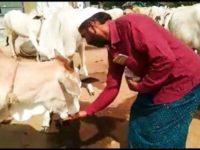 आंध्र के चांद बाशा ने पाल रखे हैं 450 गाय, गौमूत्र और गोबर से बनाते हैं अलग-अलग प्रोडक्ट, हैदराबाद से मुंबई तक होती है सप्लाई