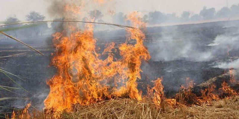 नासा की तस्वीरों में दिखने लगी दिल्ली-हरियाणा की आग, 5 साल का पैटर्न हो रहा फॉलो