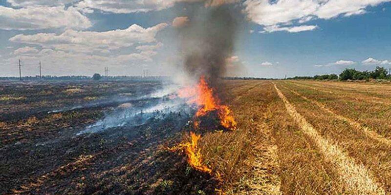 दिल्ली की एयर क्वालिटी गिरी! पिछले साल के मुकाबले हरियाणा और पंजाब में पराली जलाने की घटनाओं में कमी