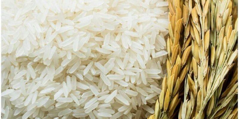 पालघर के किसानों के लिए खुशखबरी! 'वाडा कोलम' चावल की होगी इंटरनेशनल मार्केटिंग
