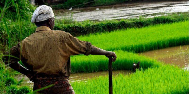 किसानों की आय डबल करने के लिए सरकार ने उठाए कई अहम कदम