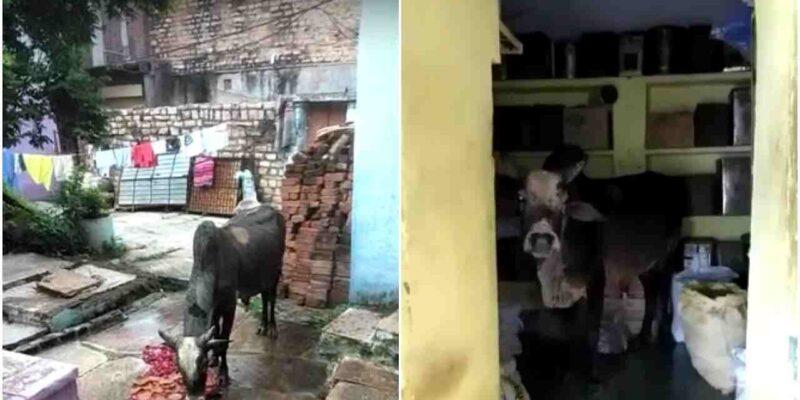 हेलो CM साहब! प्लीज सांड को ले जाइए, मध्य प्रदेश में लोगों ने शिवराज सिंह से लगाई गुहार, जानें क्या है पूरा मामला