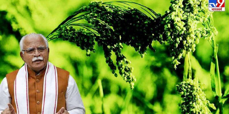 हरियाणा में एमएसपी से आधे दाम पर बाजरा बेचने को मजबूर किसान, लागत भी नहीं दिला पा रही सरकार