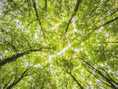 भारत में 20 साल में खत्म हुए 20 लाख हैक्टेयर वन, पेड़ों की कटाई के मामले में टॉप पर हैं पूर्वोत्तर के 7 राज्य: स्टडी