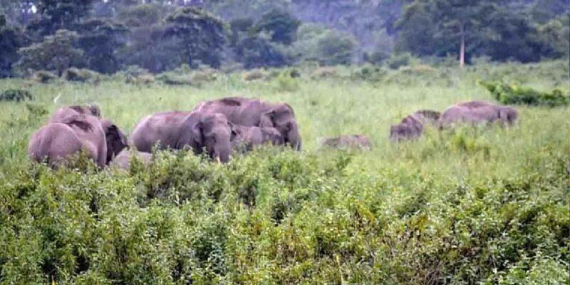 Jharkhand News: झुंड से बिछड़े हाथी ने मचाया कोहराम, 2 दिनों में हजारीबाग में 5 को कुचला, इलाके में दहशत