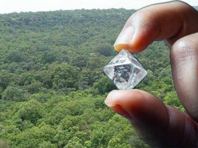 मध्य प्रदेश: बक्सवाहा जंगल में हीरा खनन पर हाई कोर्ट ने लगाई रोक, कहा- नष्ट हो सकती हैं पाषाण युग की पेंटिंग्स