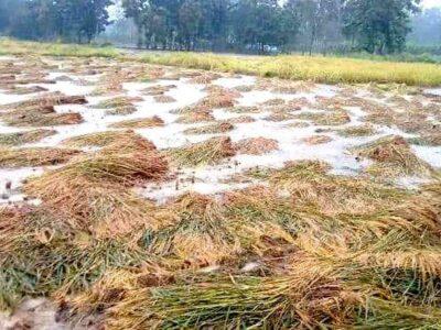 महाराष्ट्र: बारिश के कारण फसल हुई बर्बाद, आर्थिक संकट झेल रहे किसान टाल रहे बेटियों की शादियां