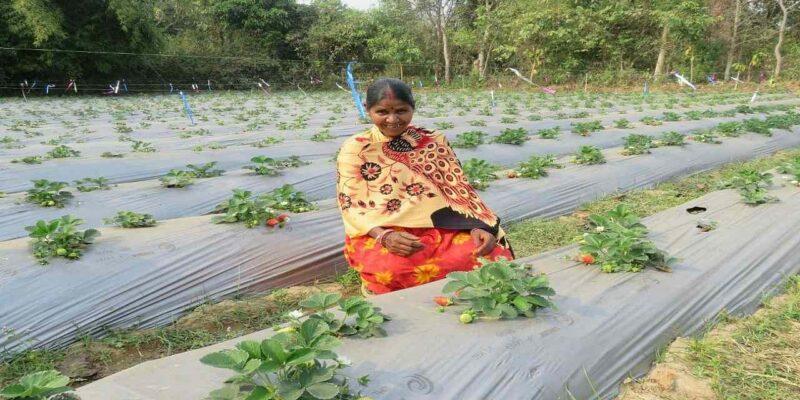 झारखंड में किसानों की आमदनी को डबल करने के लिए शुरू होगी नई योजना, मुफ्त में मिलेगी ट्रेनिंग