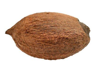 One Eye Coconut : पांच कल्पों में से एक है एकाक्षी नारियल, पूजा में प्रयोग करने पर मिलते हैं बड़े लाभ