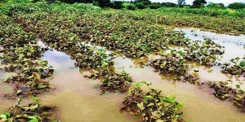 बाढ़ और बारिश से बेहाल किसानों के लिए आई राहत वाली खबर, 10,000 करोड़ रुपये के पैकेज का एलान