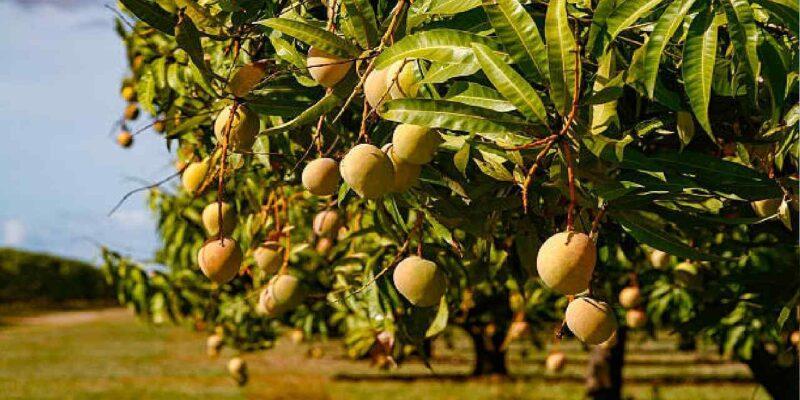 रिटायर्ड फौजी बना किसान! पेंशन के पैसे खर्च कर लगाए फलदार पौधे, स्थानीय लोगों के लिए बना कमाई का जरिया