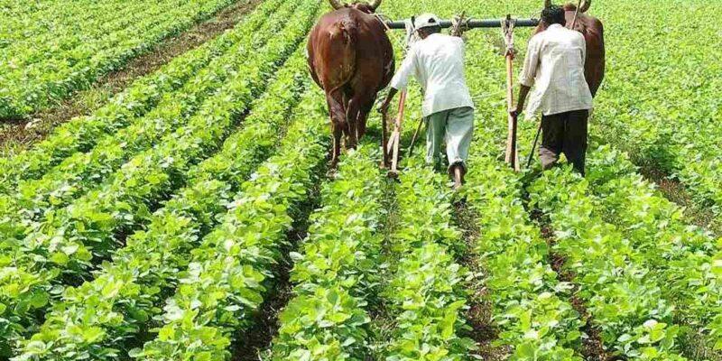Soybean Price: एक चौथाई रह गया सोयाबीन का दाम, कौन है जिम्मेदार?