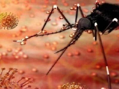 डेंगू की तरह ही होते हैं जीका वायरस के लक्षण, गर्भवती महिलाओं को खास सावधानी बरतने की जरूरत