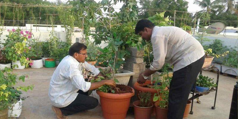 बागवानी का शौक पूरा करने के लिए घर की छत को ही बना दिया खेत, 10 साल से पूरा परिवार खाता है जैविक फल और सब्जियां