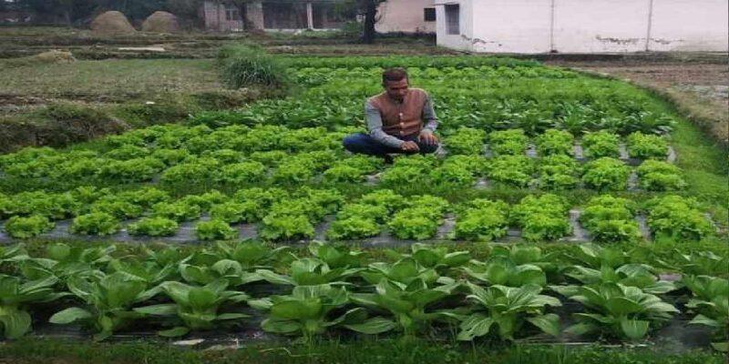 केमिकल फ्री खेती कर रहीं हिमाचल प्रदेश की महिला किसान, विदेशों से भारत आकर उनसे मिलते हैं लोग