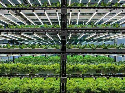 हाइड्रोपोनिक खेती के जरिये लोगों को पौष्टिक सब्जियां खिला रहा तिरुपति का युवक, उत्पाद की हो रही होम डिलीवरी